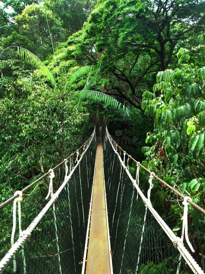 索桥在密林 免版税库存照片
