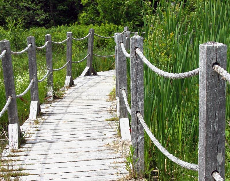 索桥在森林里 库存照片
