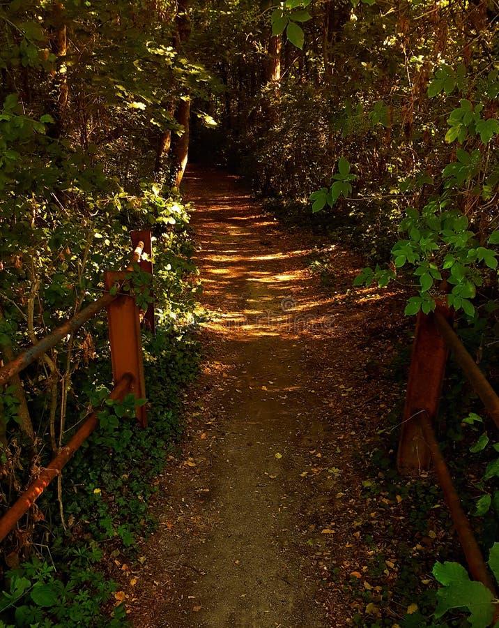 桥梁到森林里 免版税库存图片
