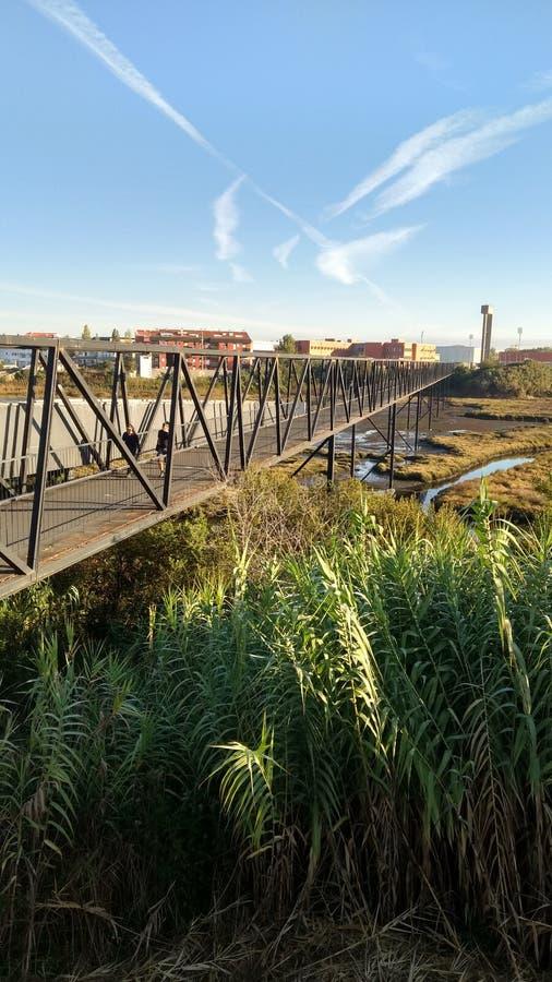 桥梁和沼泽 图库摄影
