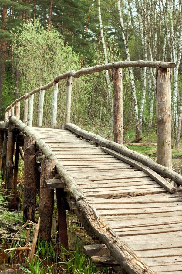 桥梁在春天森林里 图库摄影
