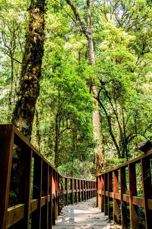 桥梁在森林, chiangmai泰国里 免版税库存图片