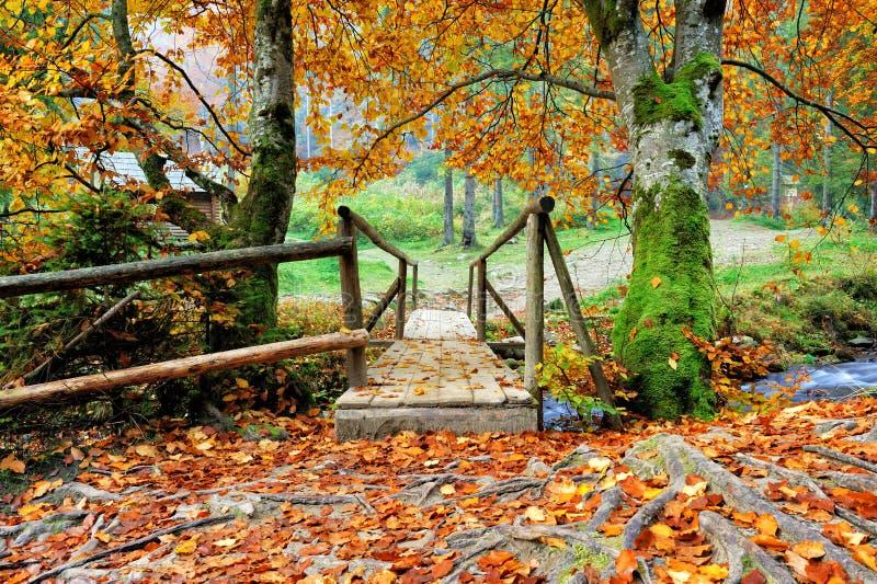 桥梁在秋天森林里 库存图片