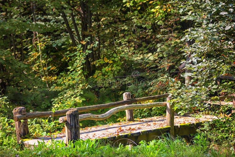 桥梁在秋天森林锡古尔达,拉脱维亚里 图库摄影