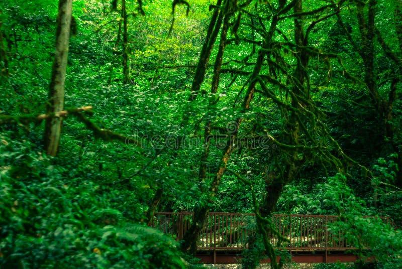 桥梁在阔叶烟草的森林里 库存照片