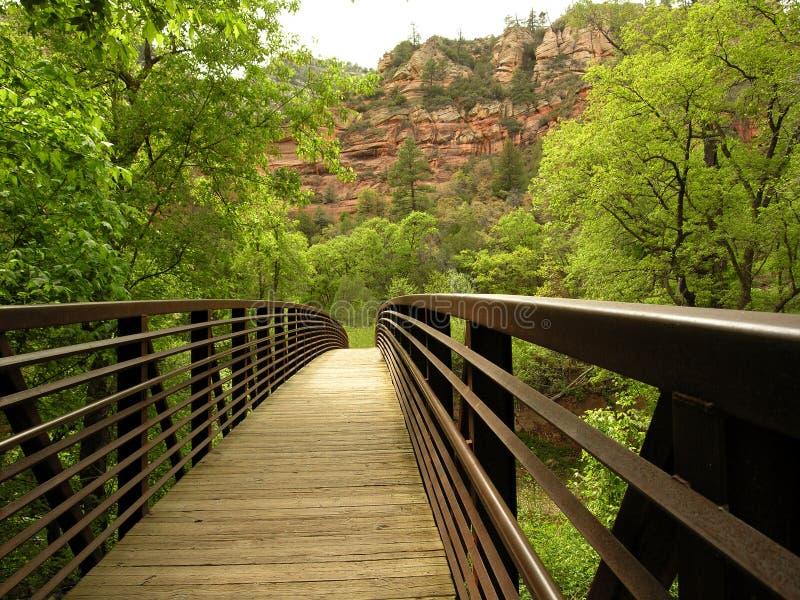 桥梁小河橡木 库存图片