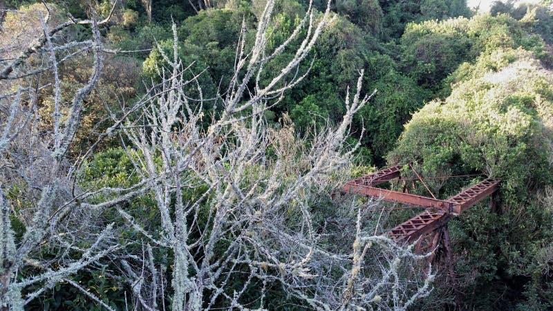 桥梁废墟通过新西兰灌木 免版税库存照片
