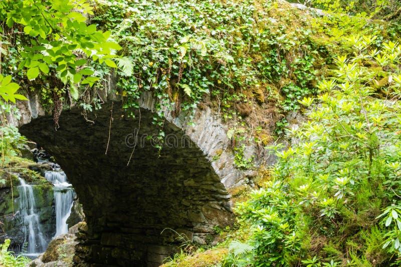 桥梁森林瀑布爱尔兰 免版税库存照片