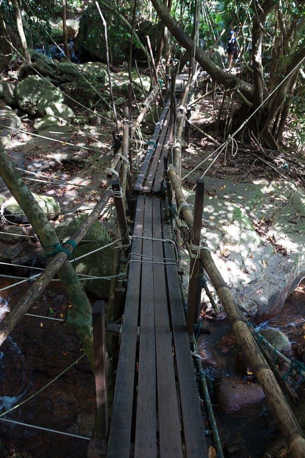 桥梁深密林 图库摄影