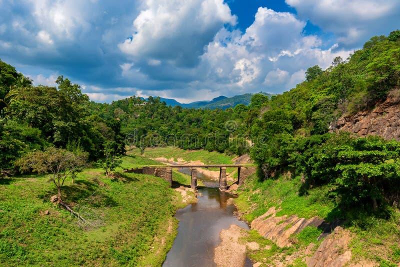 桥梁风景在河的在密林 库存照片