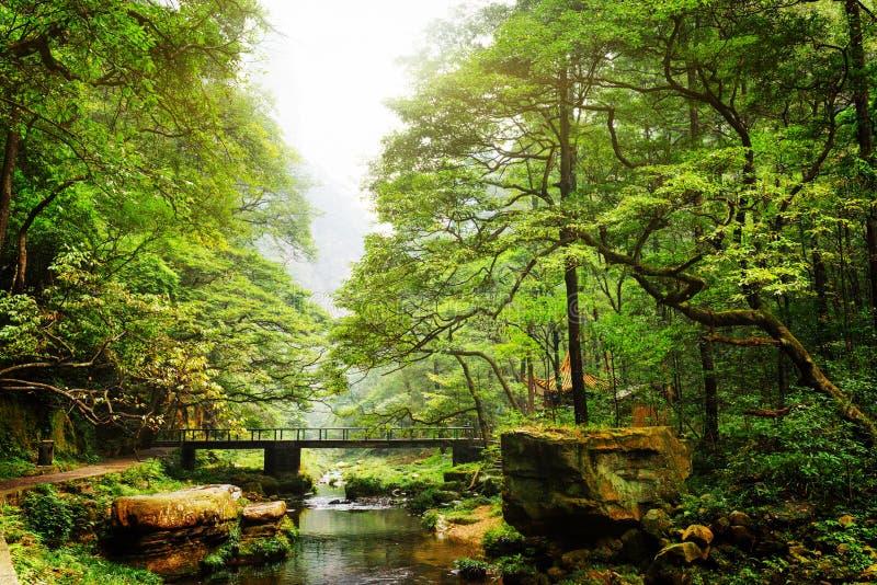 桥梁风景看法在河的在美丽的绿色森林中 免版税库存照片
