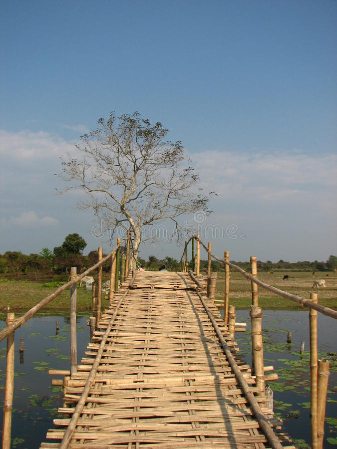 桥梁, Buxa储备森林 库存图片
