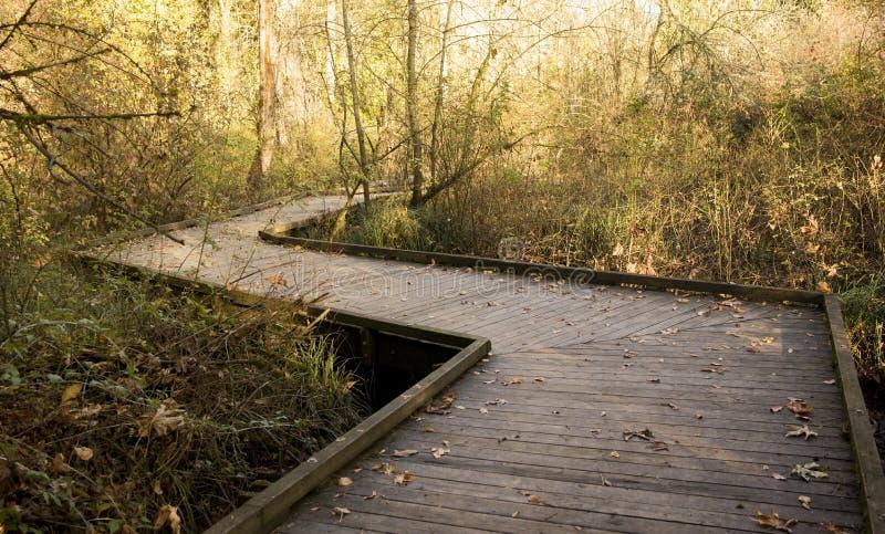 桥梁/路在秋天森林里,喜悦,peacefullness,凝思,禅宗,精神状态背景  图库摄影