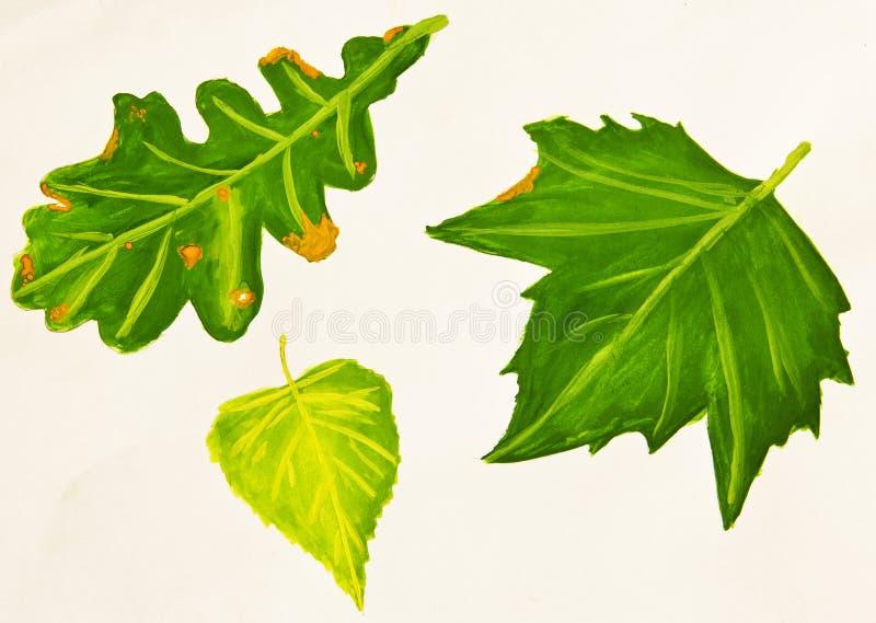 桦树、橡木和枫叶 皇族释放例证