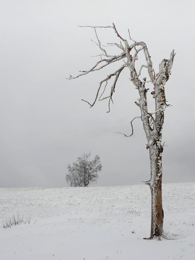 桦树停止ii 图库摄影