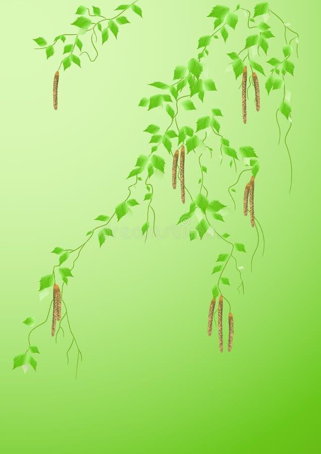 桦树叶子 向量例证