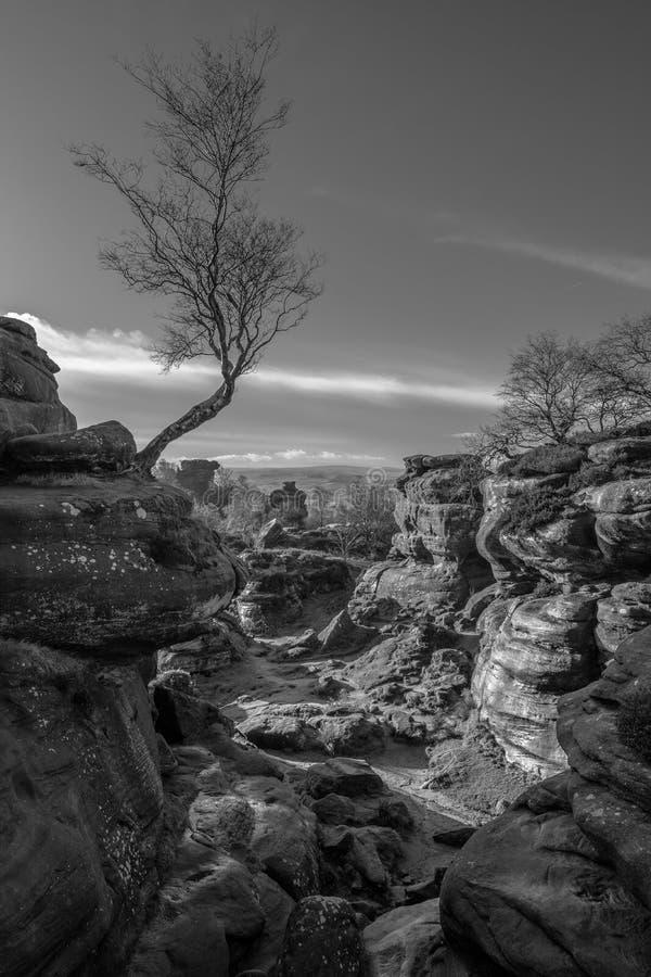 桦树和自然岩层 图库摄影