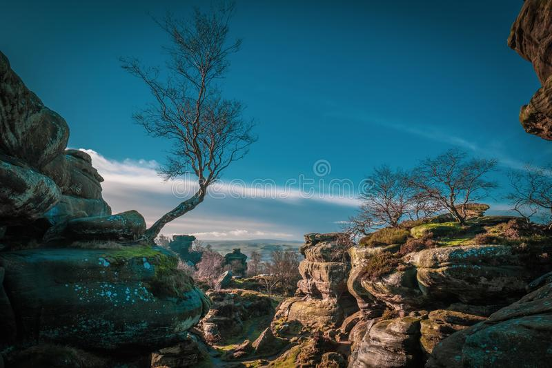 桦树和自然岩层 库存图片
