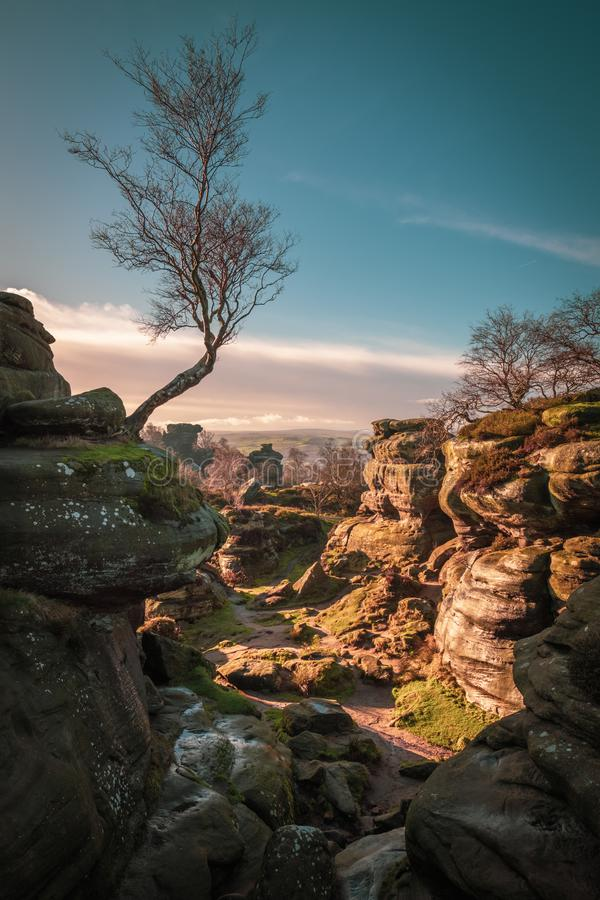 桦树和自然岩层 免版税图库摄影
