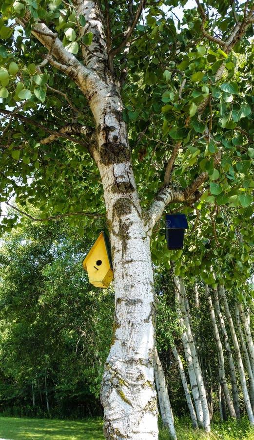 桦树和鸟舍 免版税库存图片