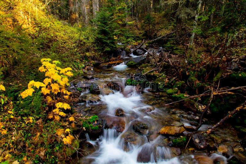 桦树小河在秋天 免版税库存图片