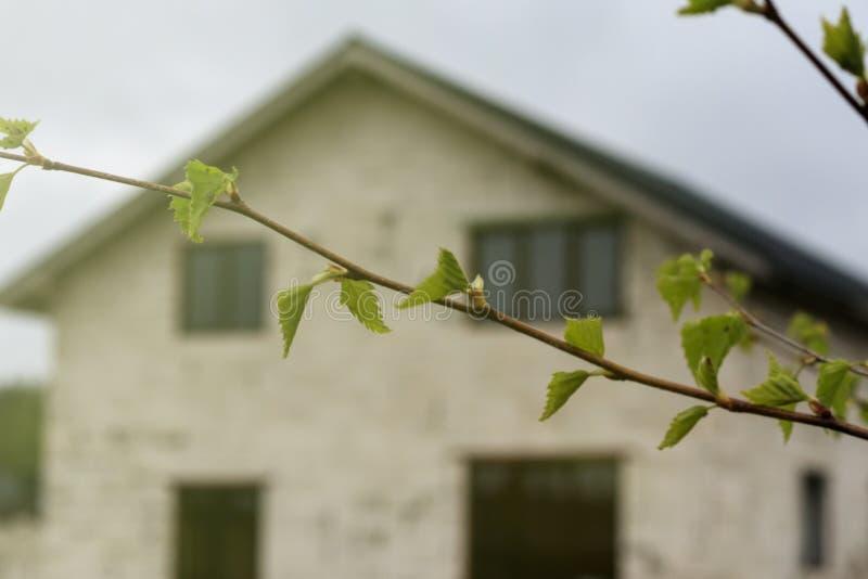 ?? ?? 桦树开始开花 有耳环 有一个房子在背景,它中是在焦点外面 图库摄影