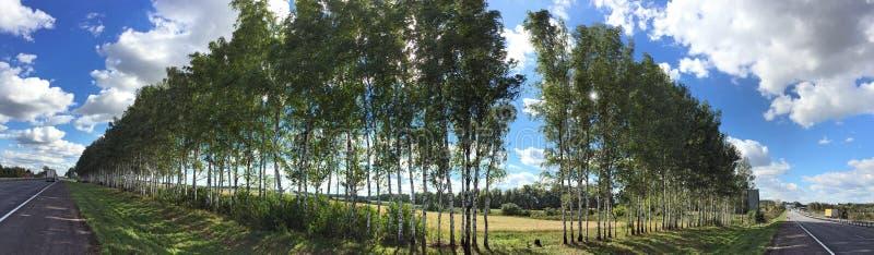 桦树护苗带沿高速公路的 库存图片