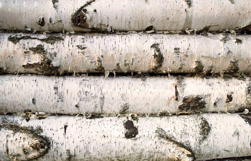 桦树木头背景 图库摄影
