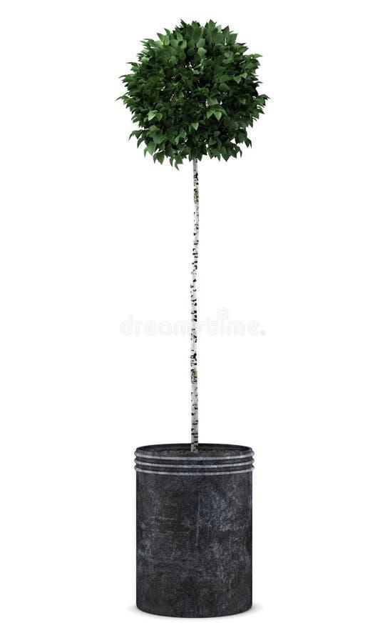 桦树查出的罐结构树白色 向量例证