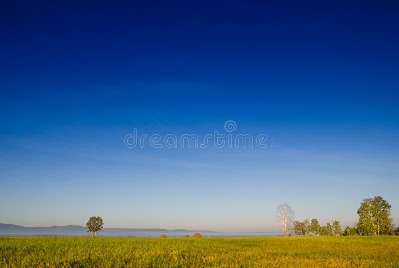 桦树树丛和绿色草甸早晨雾和天空的与 免版税库存图片