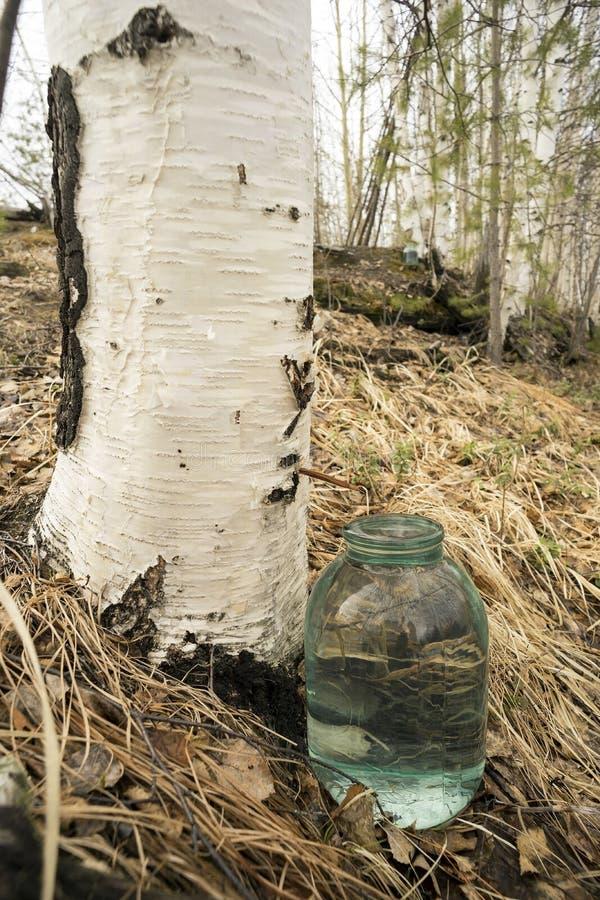 桦树树汁水滴到瓶子里 库存照片