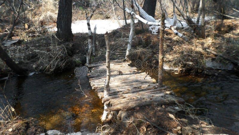桦树桥梁 库存照片