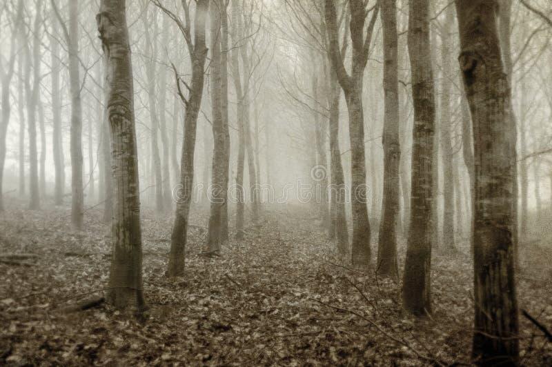 桦树的一个令人毛骨悚然的种植园在冷的,有雾,冬日 葡萄酒,乌贼属,难看的东西编辑 库存图片