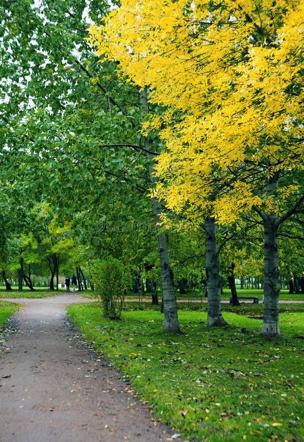 桦树胡同在有黄色和红色秋叶的公园 免版税库存图片