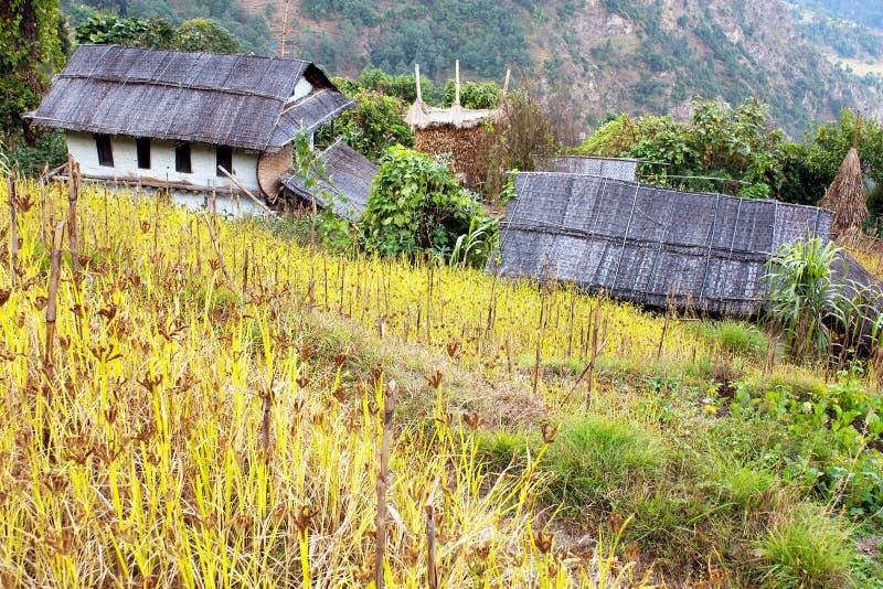 桶盖counryside尼泊尔 免版税图库摄影