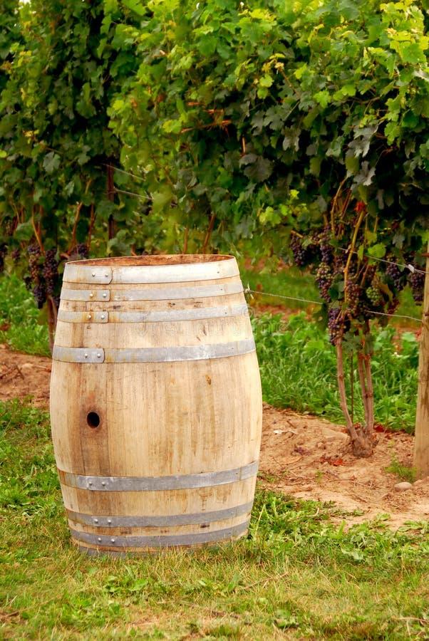 桶葡萄园酒 免版税库存图片
