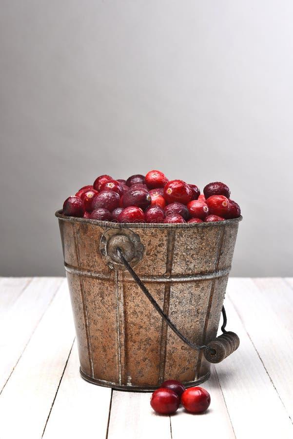 桶蔓越桔 库存照片