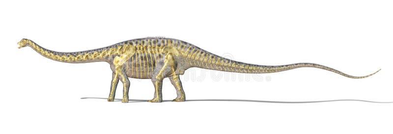 梁龙恐龙照片realistc翻译,当充分的骨骼被叠加。 向量例证