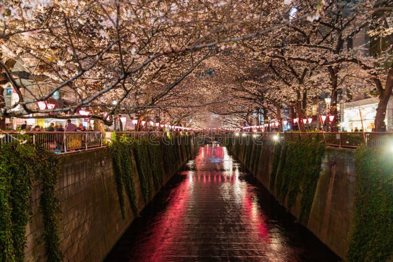 梅古罗河樱花在夜晚 免版税库存照片