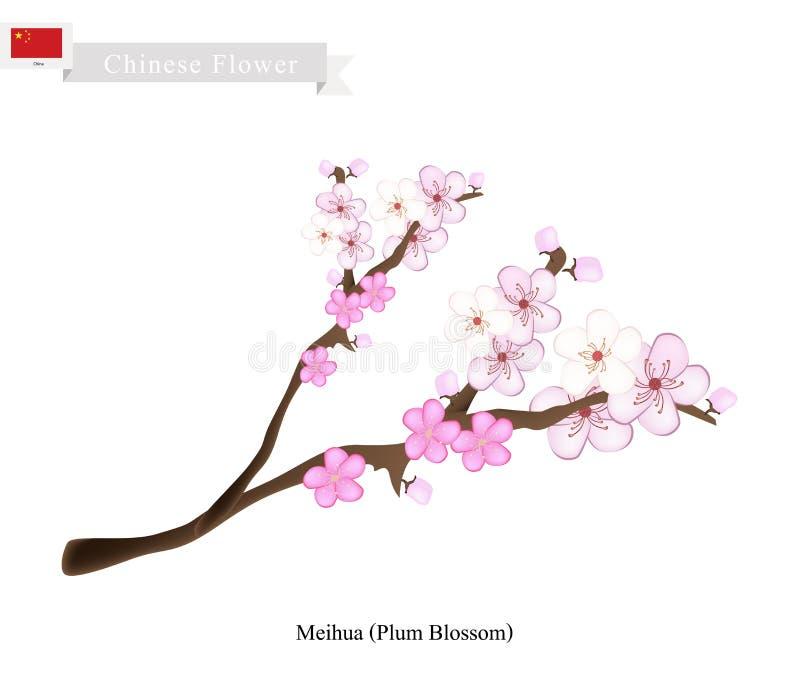 梅花镇或李子开花,一朵普遍的花在中国 向量例证