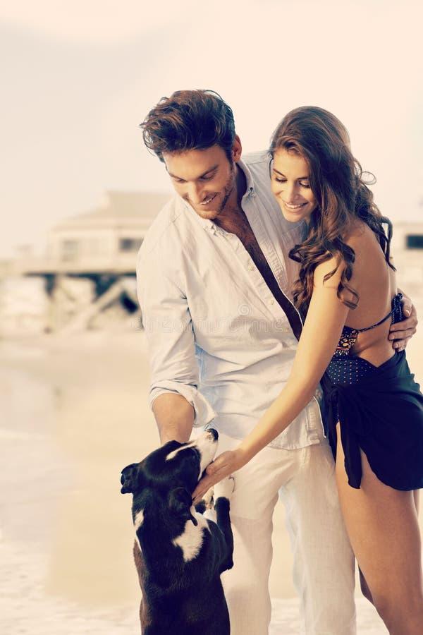 年轻梦想在夏天海滩的夫妇爱抚的狗 库存图片