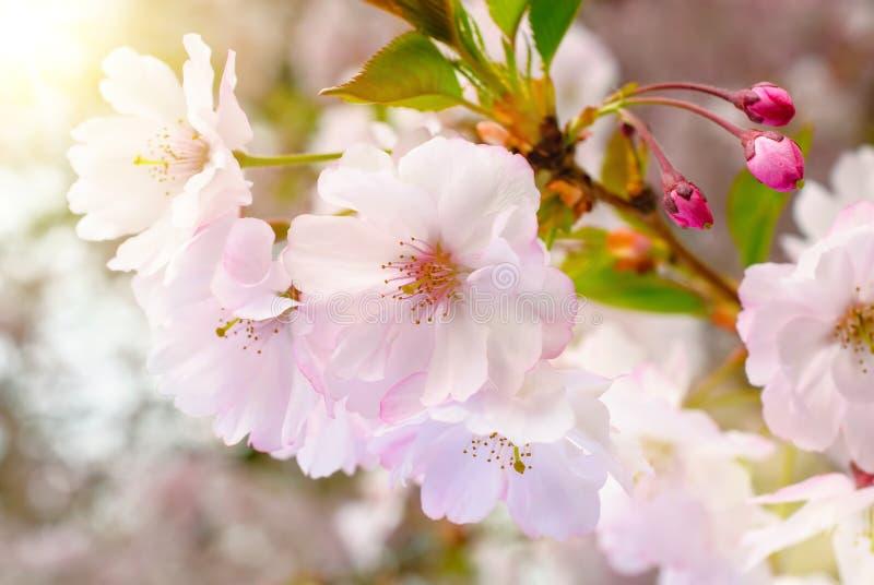 梦想的春天开花 免版税图库摄影