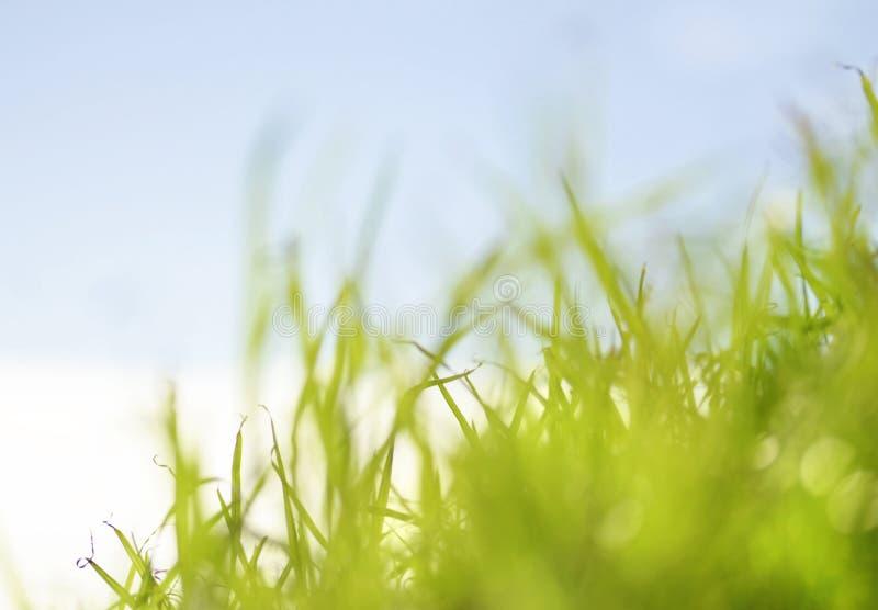 梦想的背景草沙丘俯视的海 库存图片