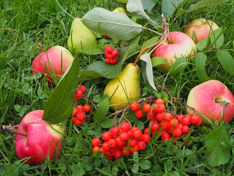 梨和苹果收获在庭院里 免版税库存图片