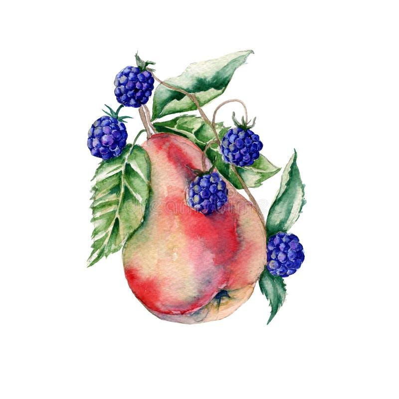 梨和黑莓在花束 框架 背景查出的白色 库存例证