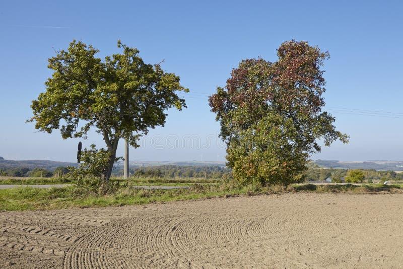 洋梨树-在一个开放风景的两棵洋梨树 库存照片