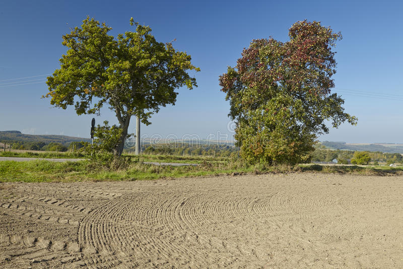 洋梨树-在一个开放风景的两棵洋梨树 免版税库存照片