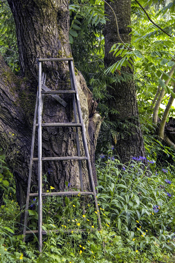 梯子老木 免版税库存图片