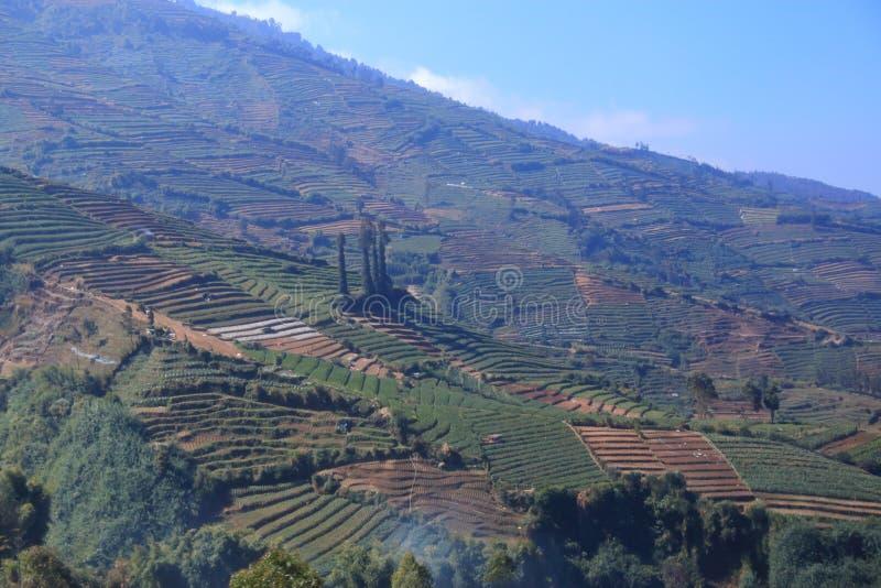 梯田是技术种植在高地 库存照片