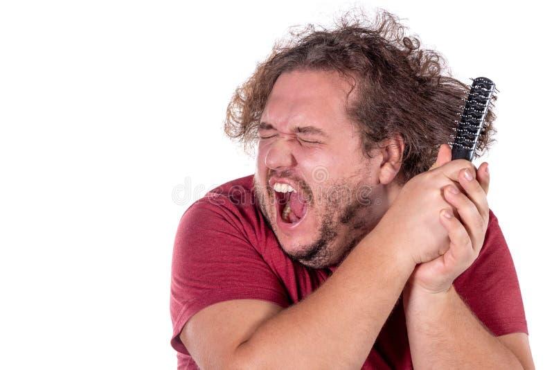 梳他的有在白色背景隔绝的一把小黑梳子的被缠结的和淘气头发的肥胖人尝试接近的画象  免版税库存图片